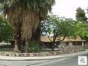 Giant trees in the lovely Glen Heather Neighborhood  of Vintage Las Vegas