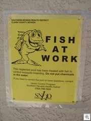 Fish At Work